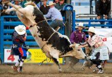 Patrocínio campeonato de Rodeio em touros
