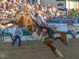 Rodeio em cavalos Estados Unidos